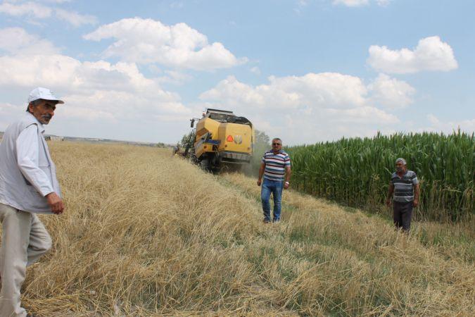 Nevşehir'de saman hasadı başladı