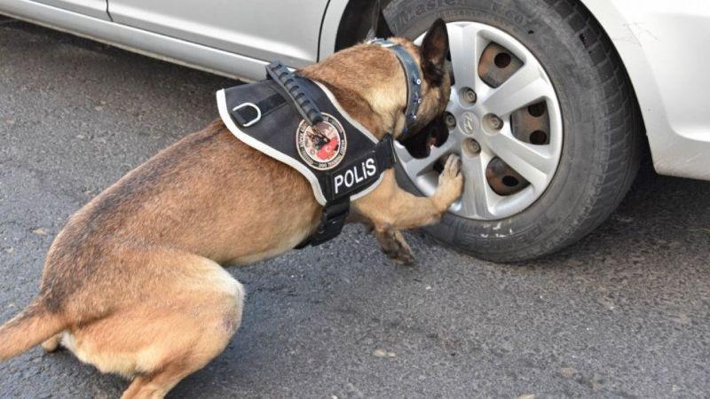 Nevşehir'de narkotik köpeği destekli uyuşturucu operasyonu