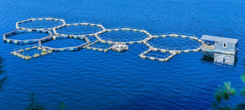 """2022 Yılı """"Balıkçılık ve Su Ürünleri Yılı"""" İlan Edildi"""