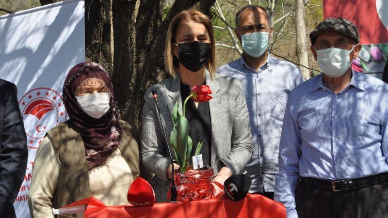 Mustafapaşa'da Lale Üretimine Başlandı