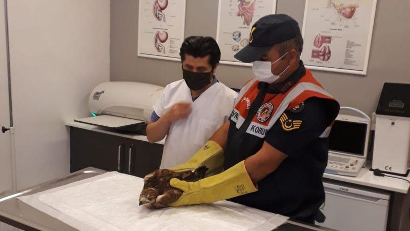 Kozaklı'da Yaralı Şahin Bulundu