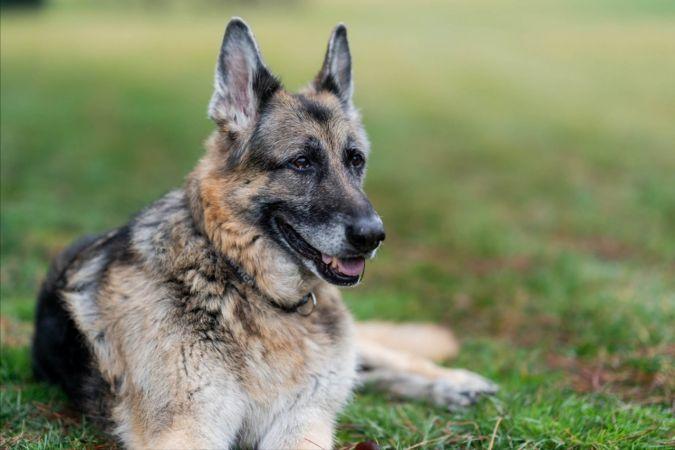 Biden Çiftinin Köpeği Champ Öldü