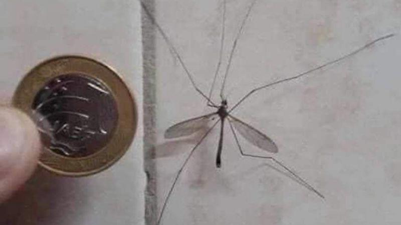Bakın Aslında Bu Böcek Neymiş?