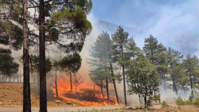 Komşu İl Kayseri'de Orman Yangını