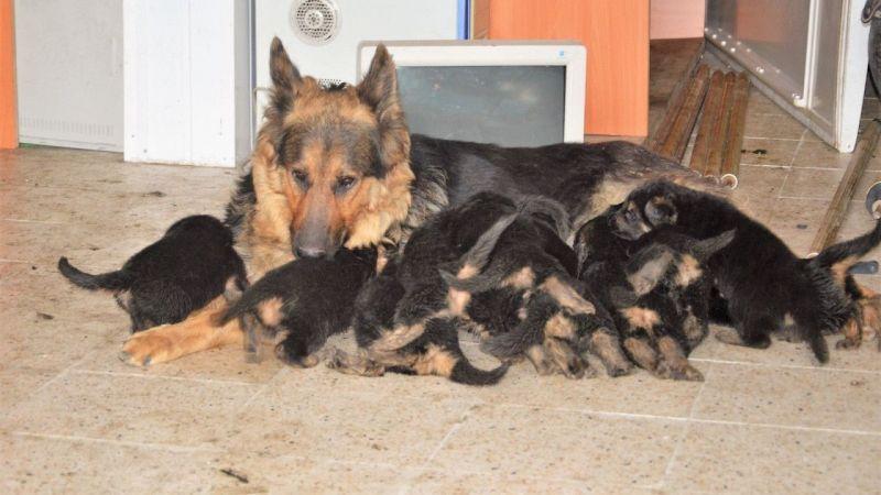 6 Beklerken 11 Yavru Doğurdu
