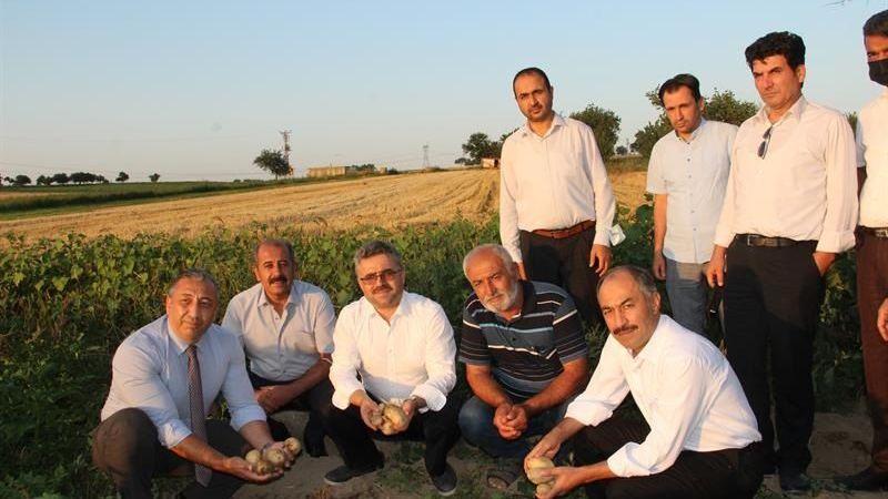 Kaymaklı Kasabasında Denemesi Yapılan Patates Çeşitleri İncelendi