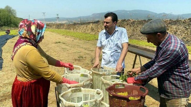 CHP'li Başevirgen Üzüm Fiyatlarına Tepki Gösterdi