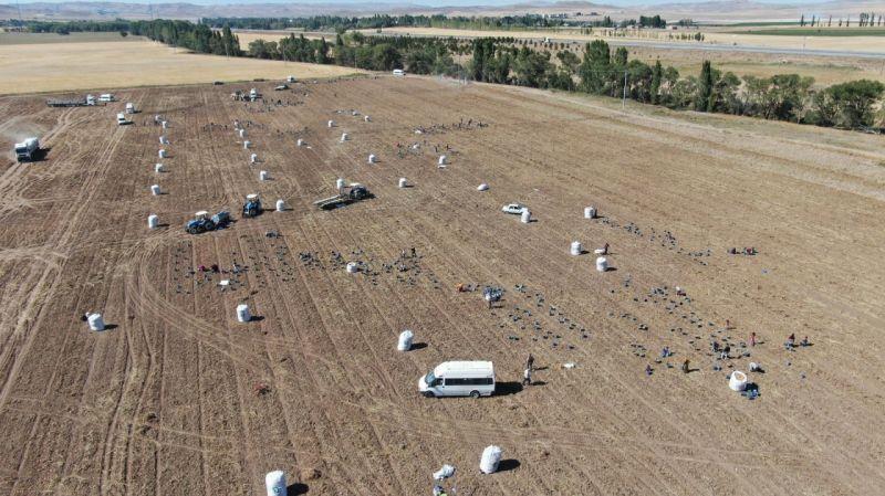 Patates İşçileri Havadan Karınca Gibi Görüntülendi