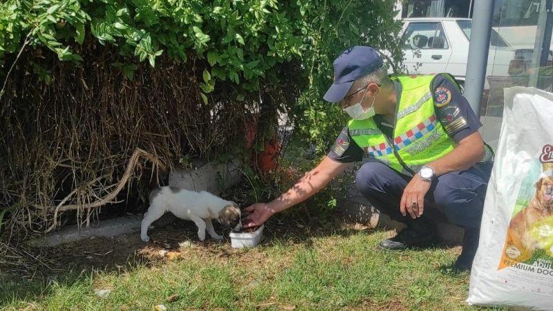 Jandarma Sahipsiz Sokak Hayvanlarını Besledi