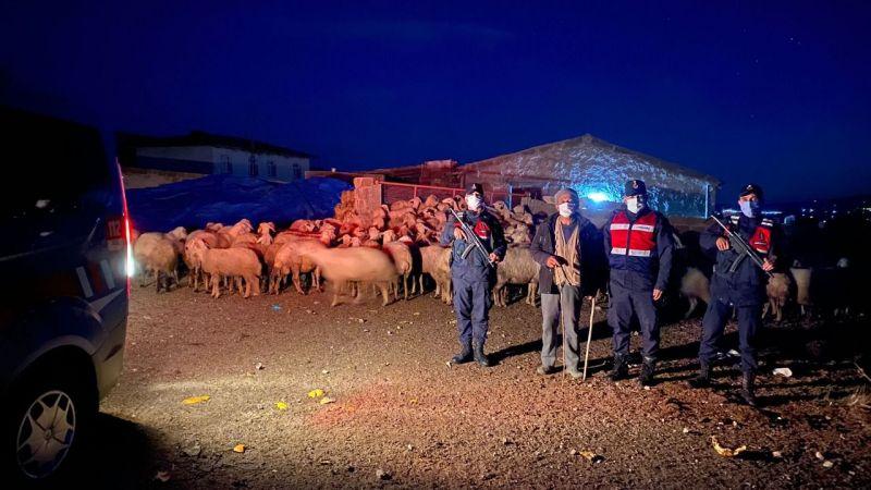 Jandarma Ekipleri Kaybolan Sürüyü Buldu
