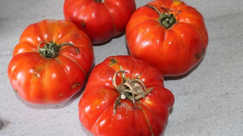 Burası Gaziantep... Sof domatesini vatandaşa haram ettiler