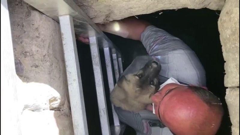 Mahsur kalan yavru köpek itfaiye erini görünce kucağına atladı