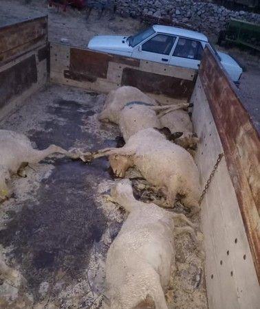 Dolu yağdı 18 koyun öldü