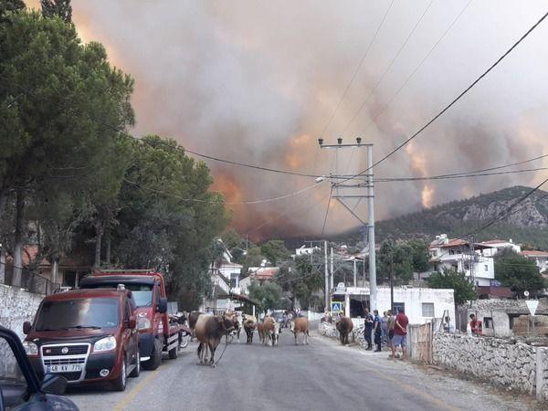 Korkulan oldu... alevler yerleşim bölgesine ulaştı, Gökbel köyü boşaltıldı