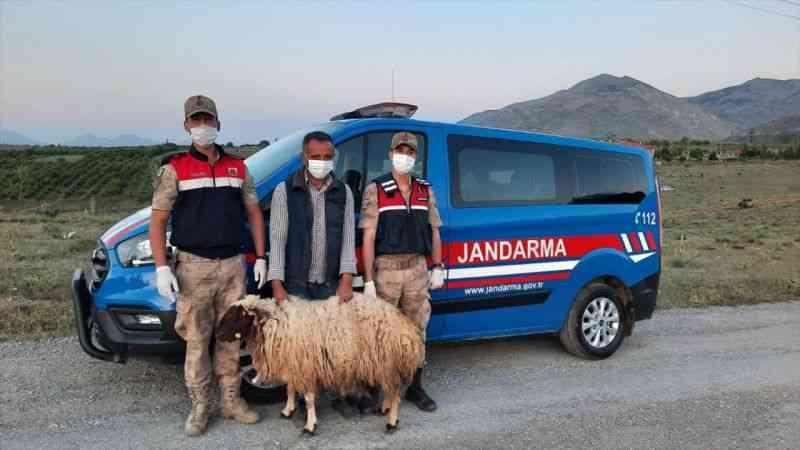 Kahramanmaraş'ta 56 küçükbaş hayvan çalan zanlıları özel ekip yakaladı