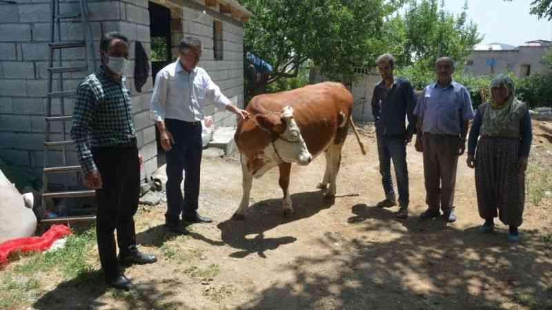 Elbistan'da geçim sıkıntısı çeken aileye inek hediye edildi