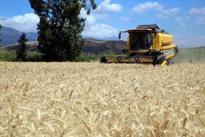 Amik Ovası'nda buğday ekim alanı ve rekoltesi artıyor