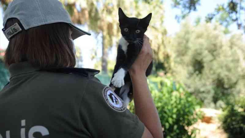 Antalya'da polisler hayvanları korumak için görev başında