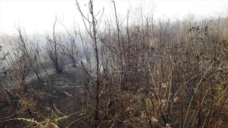 Hatay'da çıkan yangında 35 dönümlük meyve bahçesi zarar gördü