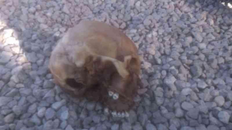 Köpeklerin bulduğu kafatasının kimliği belirlendi