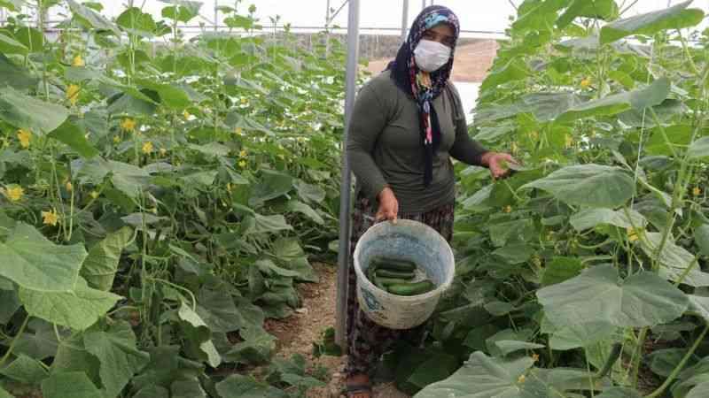 Kadın çiftçi devletten aldığı destekle tarımsal üretime katkı sağlıyor