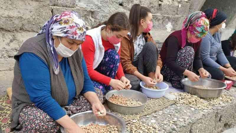 Osmaniye'de kadınların tohumluk yer fıstığı kırma mesaisi
