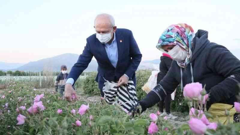 Kılıçdaroğlu, gün doğumunda işçilerle gül topladı