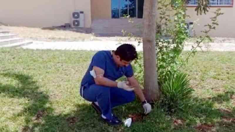 Doktor, masasına bırakılan göbek bağını çocuğununki ile hastane bahçesine gömdü