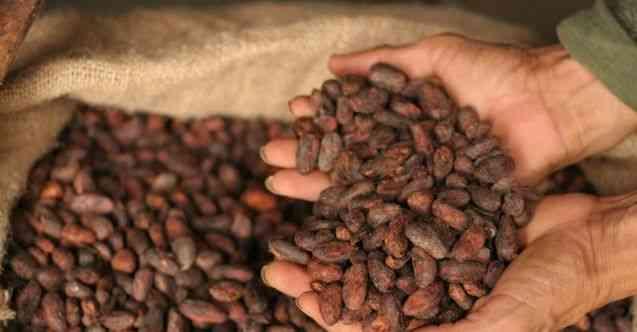 Gana, Ruanda'da kakao üretim tesisi kuracak