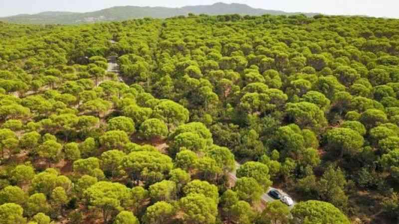 Devlet ormanlarından elde edilen ürünlerin satışına ilişkin usul ve esaslar belirlendi
