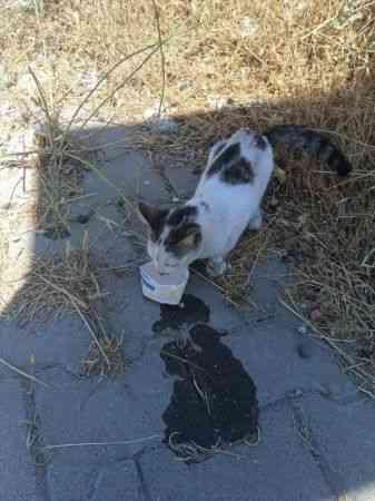 Kahramanmaraş'ta tabelaya sıkışan kediyi jandarma kurtardı