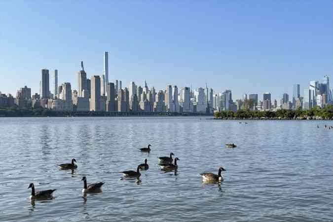 New York gökdelenleri ve Hudson Nehri üzerindeki kazlar