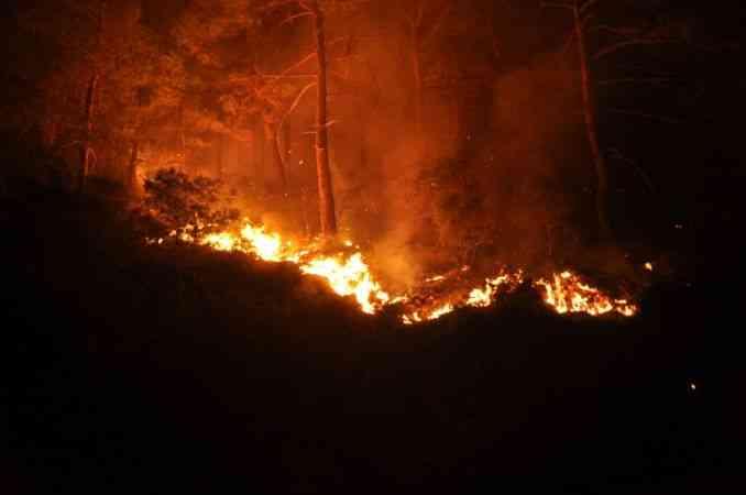 Muğla'nın Köyceğiz ilçesinde çıkan orman yangına müdahale sürüyor