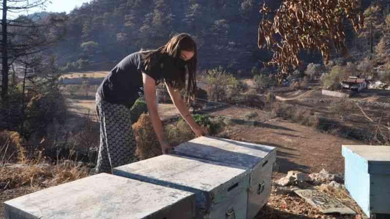 Muğla'da yangının arıcılık sektörü ve bal üretimine etkilerine ilişkin çalışma yapılıyor