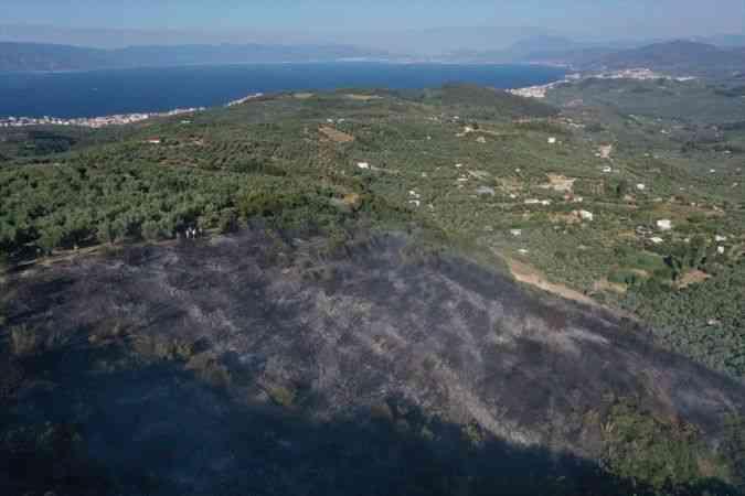 Mudanya'da çıkan orman yangınına havadan ve karadan müdahale ediliyor
