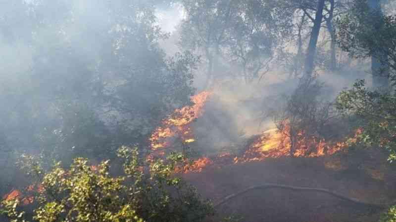 Çanakkale Tavaklı'da orman yangını çıktı
