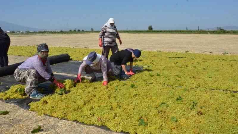 Manisa'da üzümler sergide, üreticinin gözü açıklanacak fiyatta