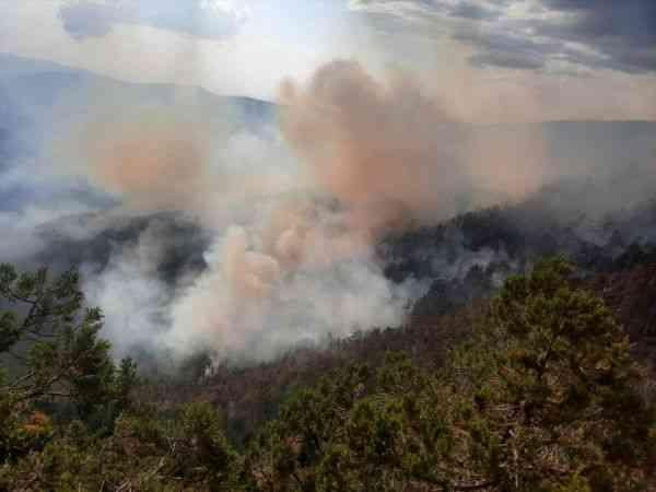 Adana'da çıkan orman yangınına havadan ve karadan müdahale ediliyor