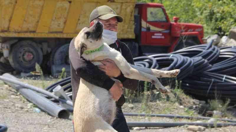 Sinop'ta selden 20 köpeği kurtarmanın mutluluğunu yaşıyor