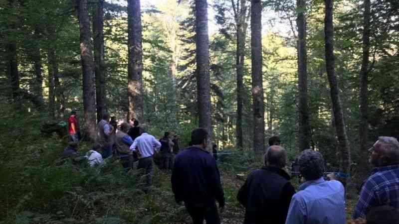 Kestiği ağacın altında kalan Gölormanı Köyü Orman Kooperatifi Başkan Yardımcısı Ay öldü