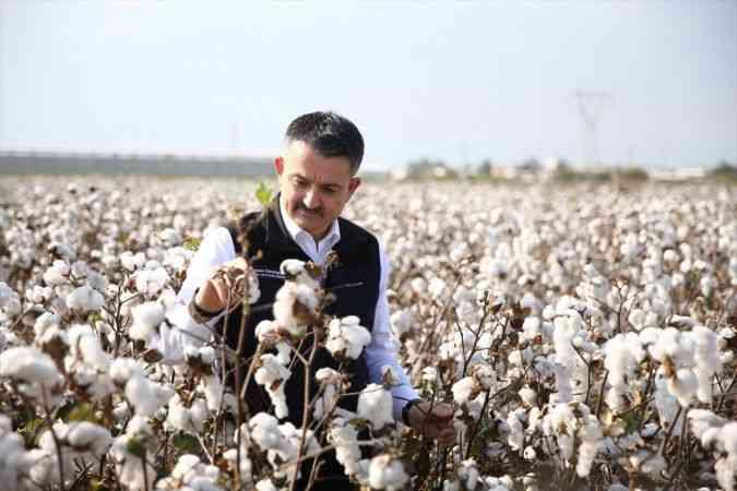 Tarım ve Orman Bakanı Bekir Pakdemirli, Adana'da pamuk hasadına katıldı