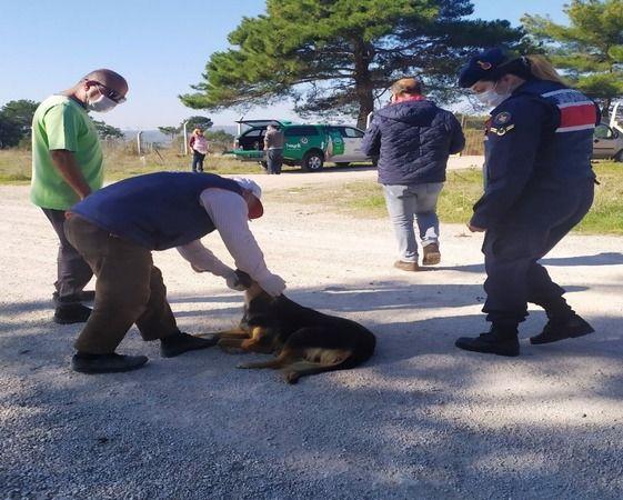 Terk edilen köpeklere jandarma sahip çıktı