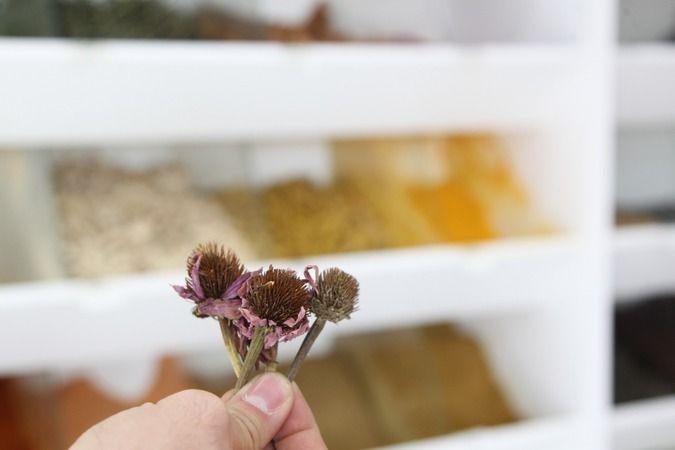 Sıcaklık farkının vücuda zararına ekinezya çaylı çözüm