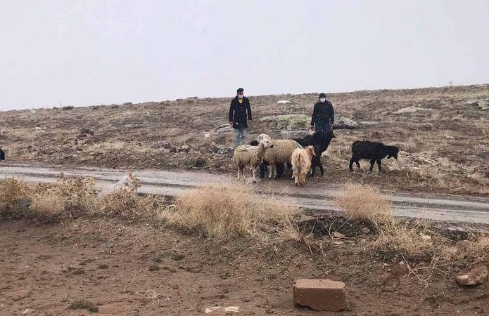 Kaybolan koyunları jandarma termal kameralı İHA ile buldu