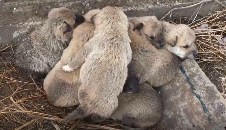 Kar altında kalan 9 yavru köpeği donmaktan son anda kurtardılar