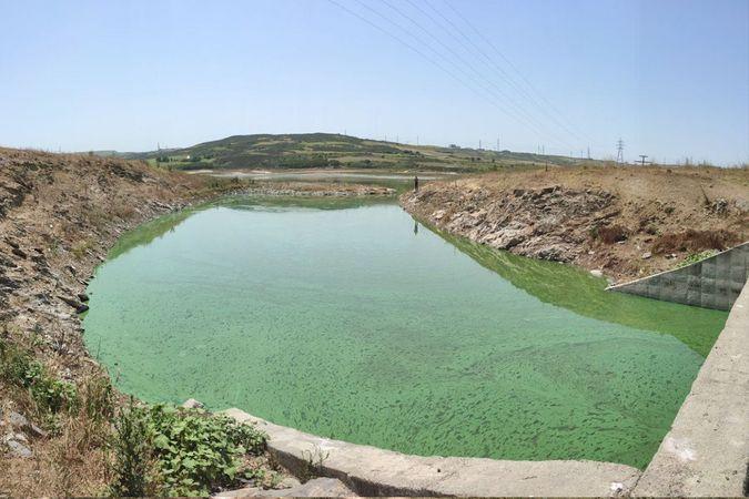 Sazlıbosna Gölü tehlike saçıyor, gölün rengi yeşile döndü