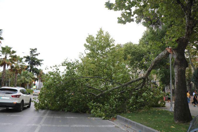 Samsun'da şiddetli fırtına ağaçları yıktı