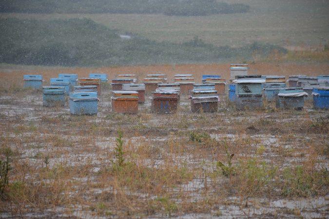Yağışlar arıları vurdu