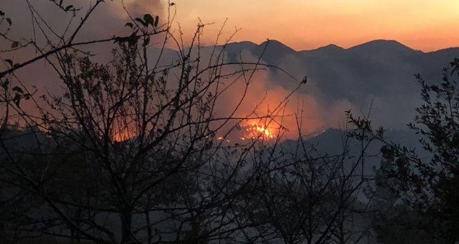Pendik'te orman yangınına havadan ve karadan müdahale