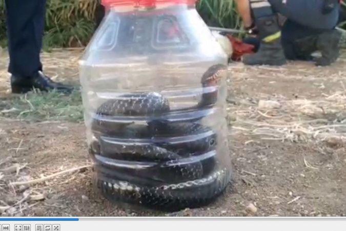 Mersin'de evde yakalanan yılan doğaya bırakıldı